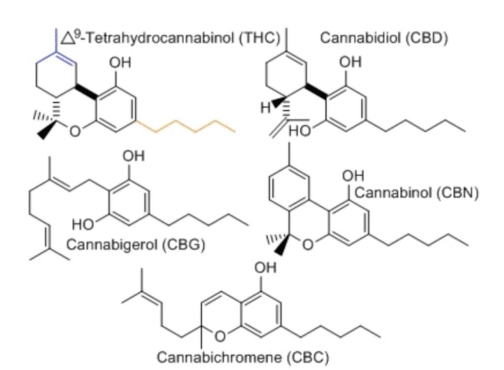 cannabinoïden cbd cbc cbg thc cbn