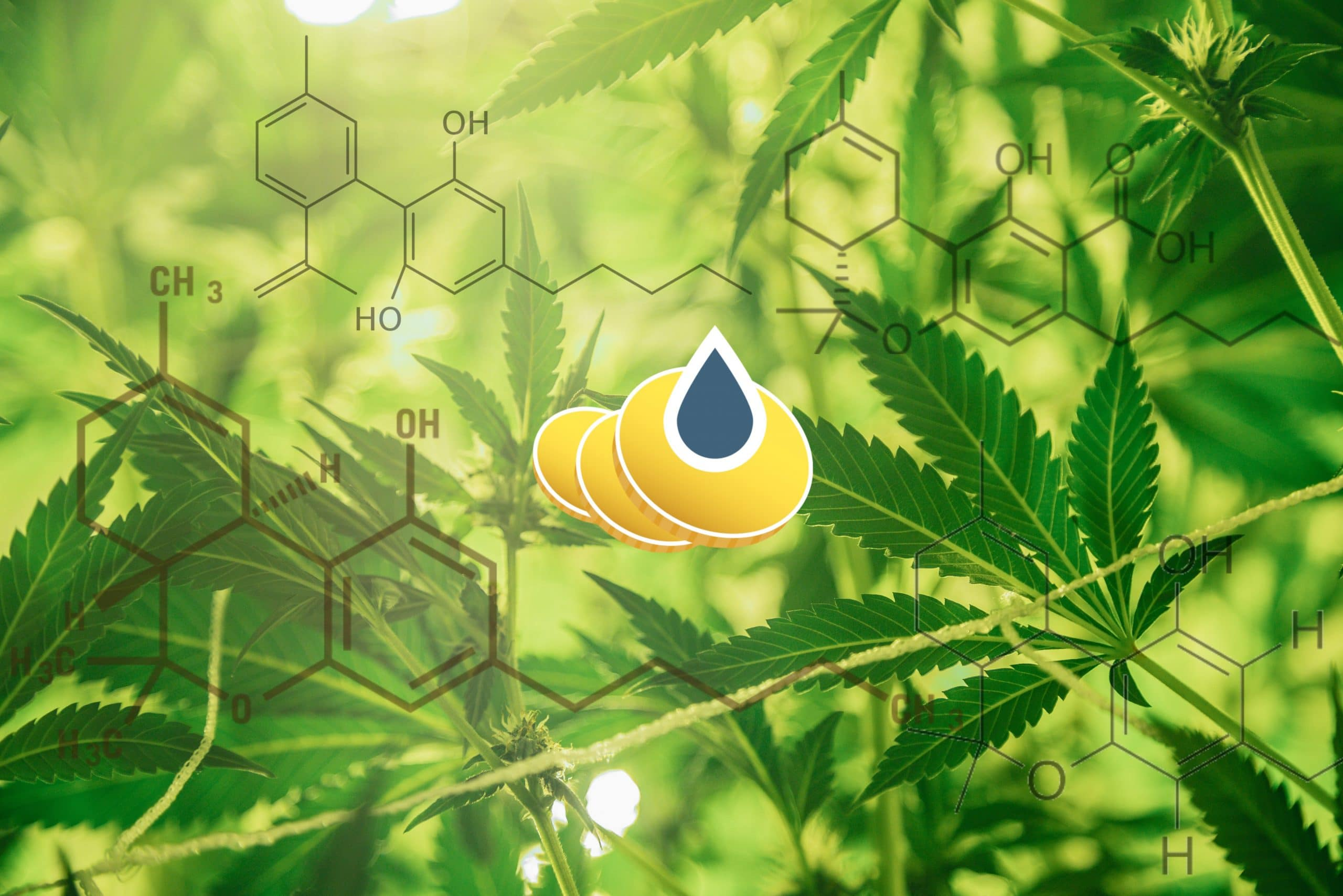 cannabinoiden naast cbd full spectrum