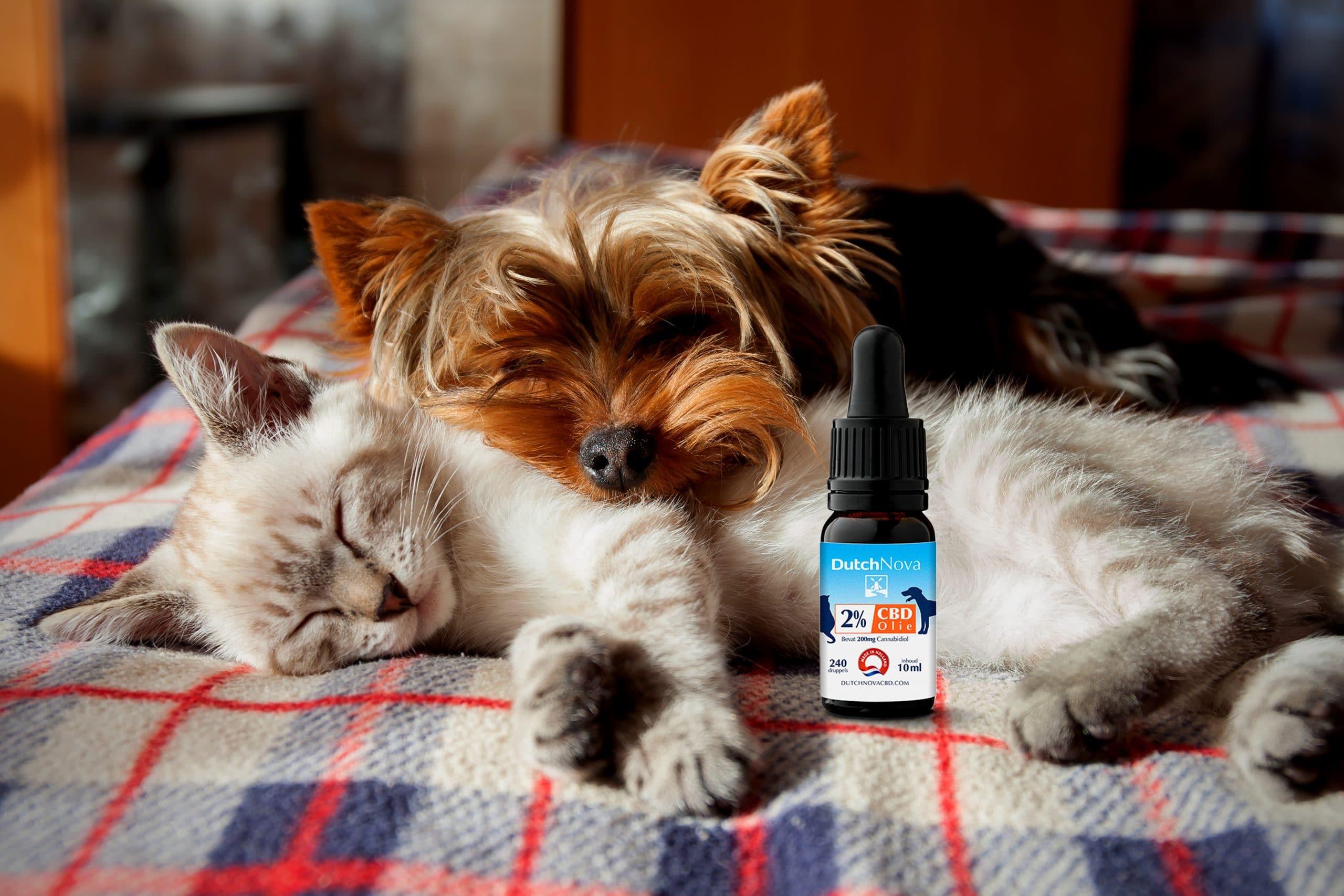 kat en hond met flesje cbd voor dieren